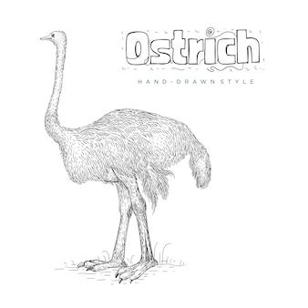 Illustration d'animaux dessinés à la main d'autruche