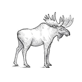 Illustration d'animaux de forêt d'orignal.