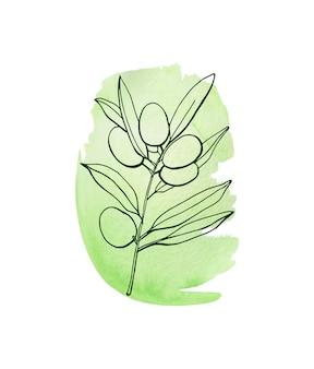 Illustration aquarelle de branche d'olivier