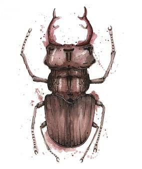 Illustration aquarelle avec cerf bug sur fond blanc et éclaboussures