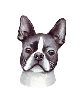 Illustration aquarelle d'un chien drôle. race de chien populaire. chien boston terrier. personnage fait main isolé sur blanc