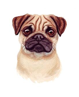 Illustration aquarelle d'un chien drôle. race de chien populaire. chien. carlin. personnage fait main isolé sur blanc