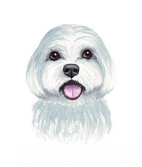 Illustration aquarelle d'un chien drôle. race de chien populaire. chien. chien maltais. personnage fait main isolé sur blanc