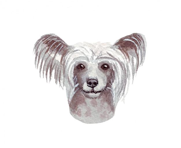Illustration aquarelle d'un chien drôle. race de chien populaire. chien chinois à crête. personnage fait main isolé sur blanc