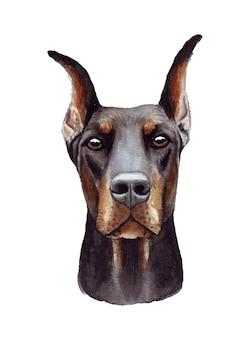 Illustration aquarelle d'un chien drôle. race de chien populaire. chien. dobermann. personnage fait main isolé sur blanc