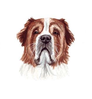 Illustration aquarelle d'un chien drôle. race de chien populaire. chien saint-bernard. personnage fait main isolé sur blanc