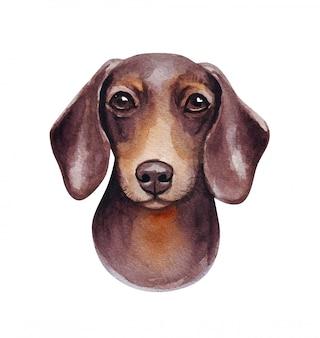 Illustration aquarelle d'un chien drôle. race de chien populaire. chien de saucisse. teckel. personnage fait main isolé sur blanc