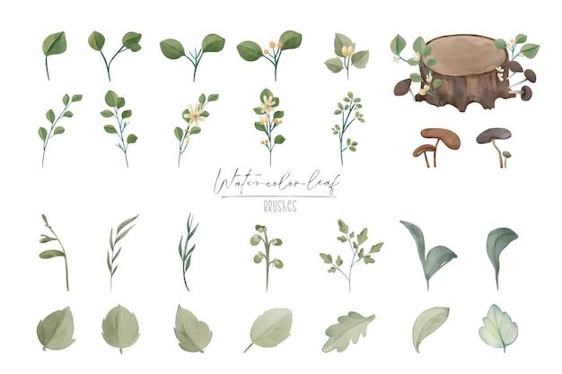 Illustration aquarelle feuille et ensemble naturel dessiné à la main sauvage