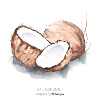 Illustration aquarelle de noix de coco