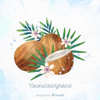 Illustration aquarelle de noix de coco