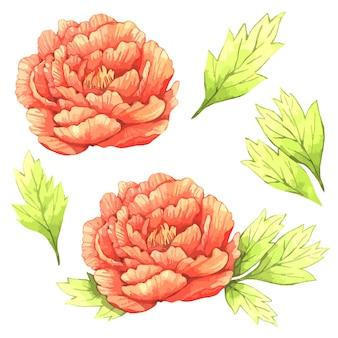 Illustration aquarelle de pivoines orange