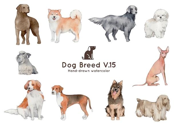 Illustration aquarelle de race de chien