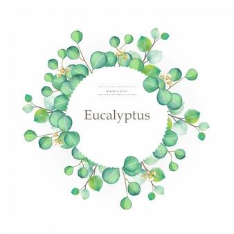 Illustration aquarelle verte d'eucalyptus