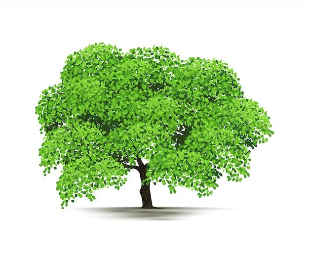 Illustration arbre isolé sur fond blanc