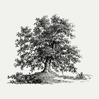Illustration d'arbre vintage