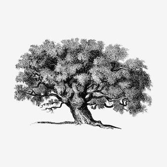 Illustration d'arbre vintage
