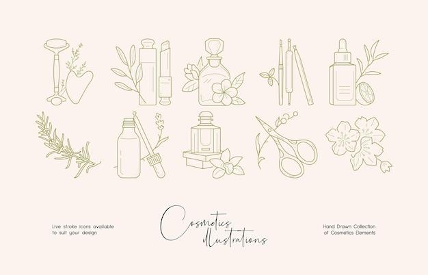 Illustration d'art en ligne de cosmétiques botaniques pour l'identité de la marque