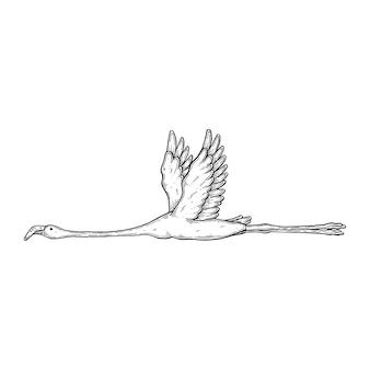 Illustration artistique vectorielle faite à la main avec plume et encre flamants roses en vol