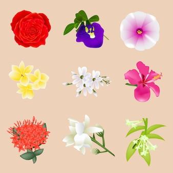 Illustration de la belle collection de fleurs