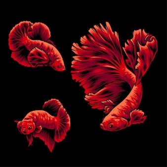 Illustration bettafish