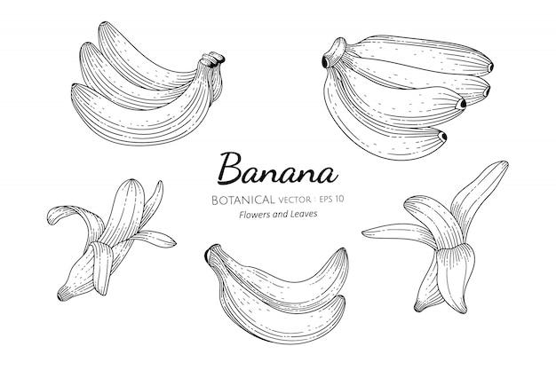 Illustration botanique dessinée à la main de fruits de banane avec dessin au trait sur blanc