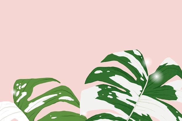 Illustration botanique de plante panachée de monstera de vecteur de fond