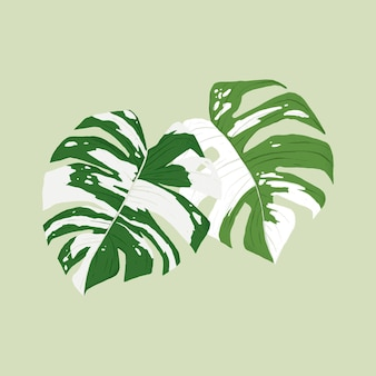 Illustration botanique de plante de vecteur de feuille de monstera