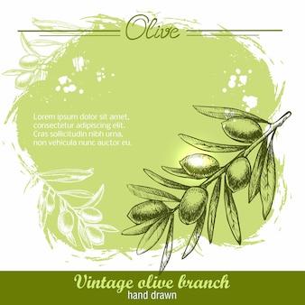 Illustration de branche d'olivier dessiné à la main sur aquarelle