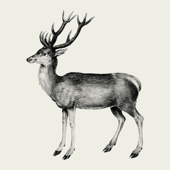 Illustration de cerf vintage en vecteur