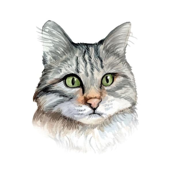Illustration de chat aquarelle peinte à la main