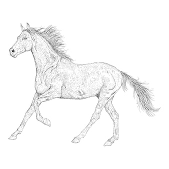 Illustration de cheval dans la conception de croquis