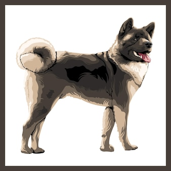 Illustration d'un chien akita.