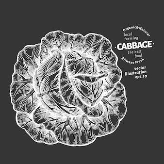 Illustration de chou. main dessinée illustration de légumes à bord de la craie.