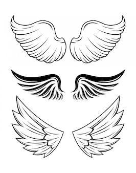 Illustration de la collection d'ailes
