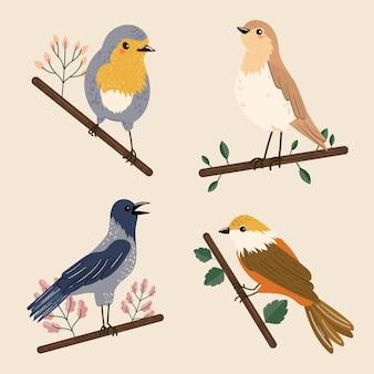 Illustration de collection d'oiseaux colorés