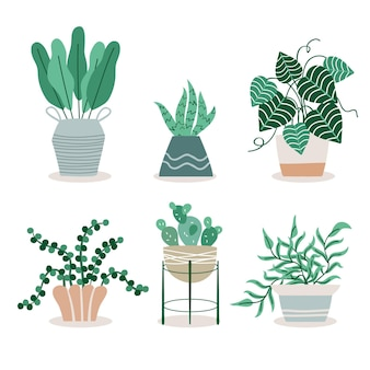 Illustration de la collection de plantes d'intérieur