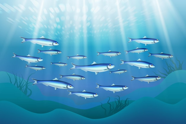 Illustration de la colonie de poissons