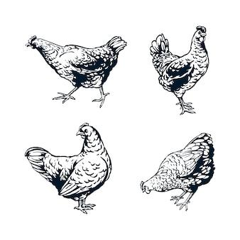 Illustration de conception d'une poule