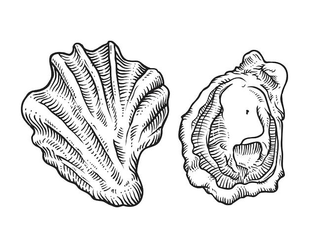 Illustration de coquille d'huîtres croquis dessinés à la main