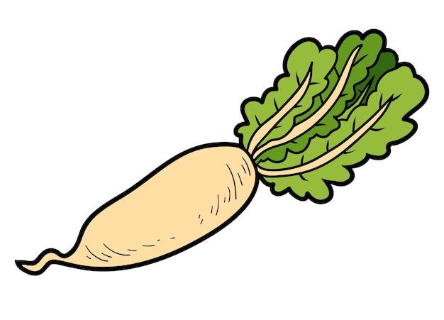 Illustration de couleur vectorielle, légumes colorés, daikon