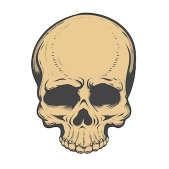 Illustration de crâne sur fond blanc. éléments pour, étiquette, emblème, affiche, t-shirt. illustration.
