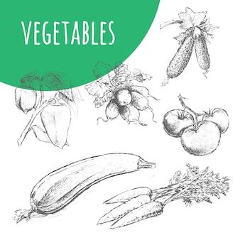 Illustration de crayon de croquis de légumes. nourriture végétarienne biologique.