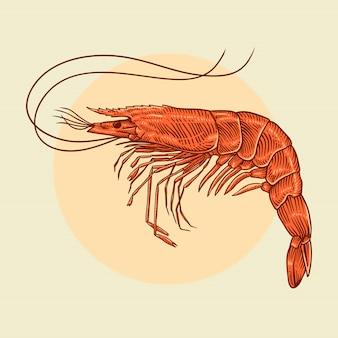 Illustration de crevettes croquis dessinés à la main