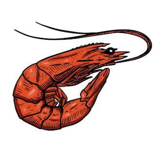 Illustration de crevettes. élément de design pour affiche, bannière, carte, menu.