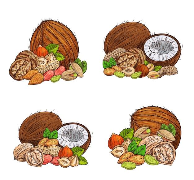 Illustration de croquis de noix et de graines isolé