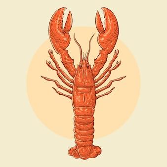 Illustration de homard dessiné main