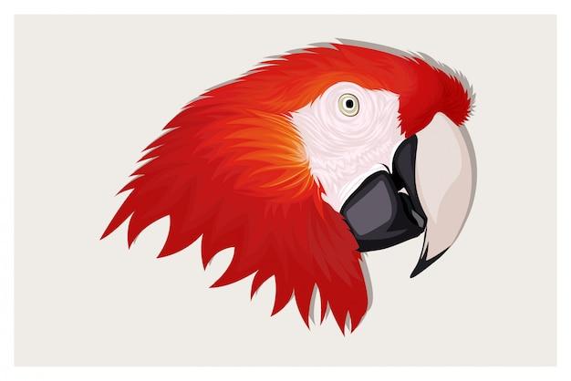Illustration dessin animé tête perroquet rouge dessin à la main