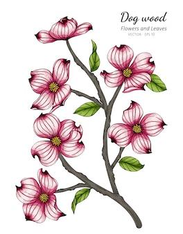 Illustration de dessin de fleur et feuille de cornouiller rose