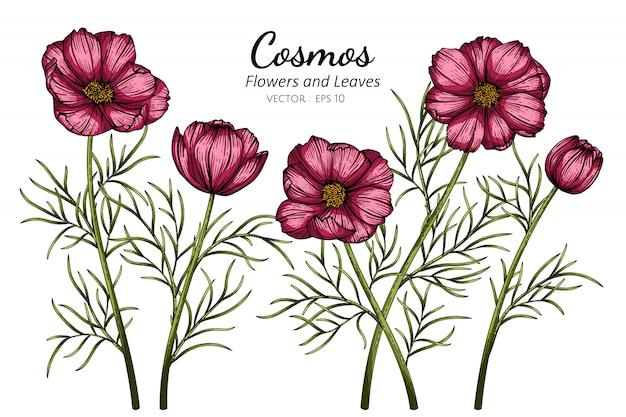 Illustration de dessin de fleur et feuille cosmos rouge