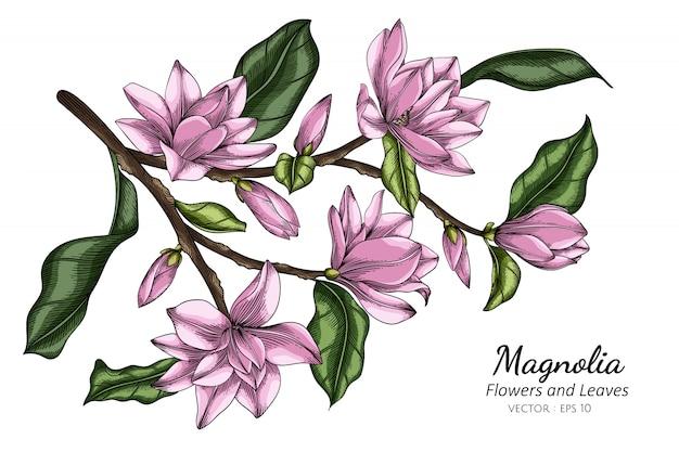 Illustration de dessin de fleur et feuille de magnolia rose